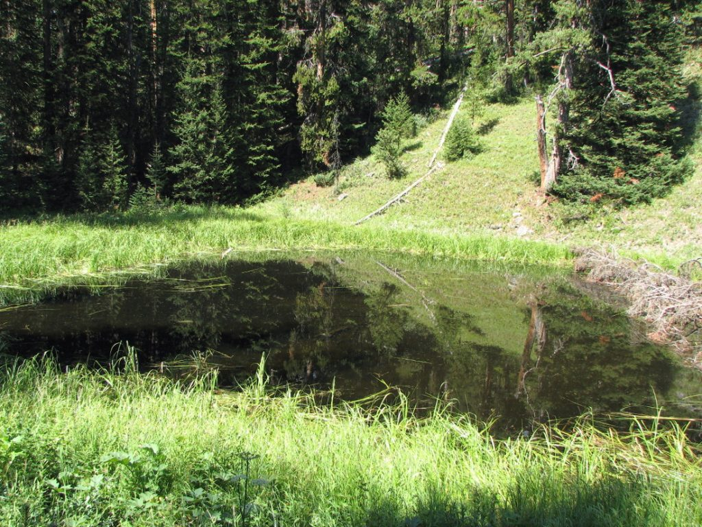 photo of a small mountain pond in the Gallatin Forest