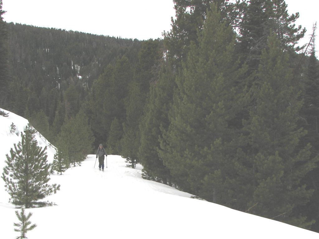 Cross country skiier on the Goose Creek trail